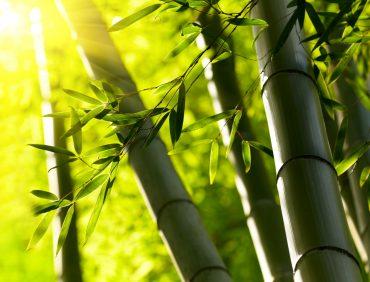 Por que utilizar uma escova de bambu?